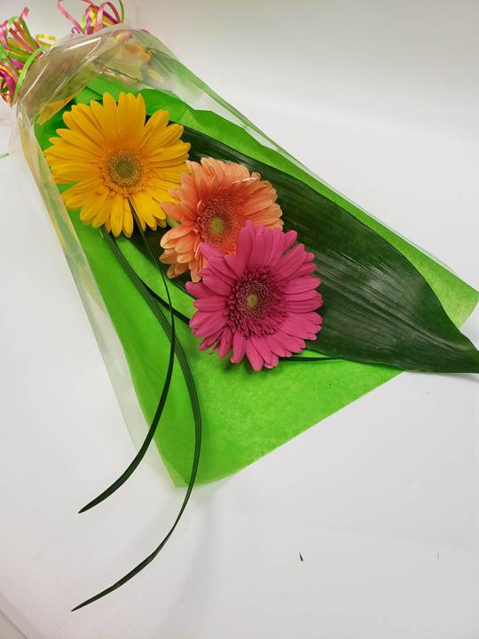 Arrangement de 3 Gerbera en cello FM015